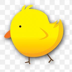 Chick - Beak Goose Cygnini Duck Bird PNG