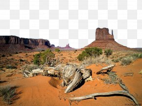 Desert Tree - Oljato Monument Valley Tours West And East Mitten Buttes Totem Pole PNG