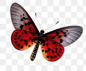Free Download Of Butterfly Icon Clipart - Butterfly Insect Stock Photography PNG