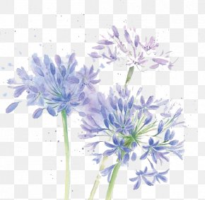 Watercolor Flowers - Floral Design Cut Flowers Chrysanthemum Blue PNG