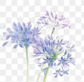 Watercolor Flowers - Floral Design Cut Flowers Chrysanthemum Blue PNG