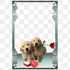 Puppy Valentine's Day Floral Frame - Love Photo Frames Picture Frame Photography Android PNG