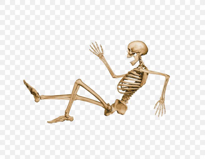 Human Skeleton Clip Art, PNG, 1600x1242px, Human Skeleton, Arm, Bone, Endoskeleton, Finger Download Free