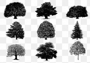 Tree Silhouette - Tree Silhouette Download PNG