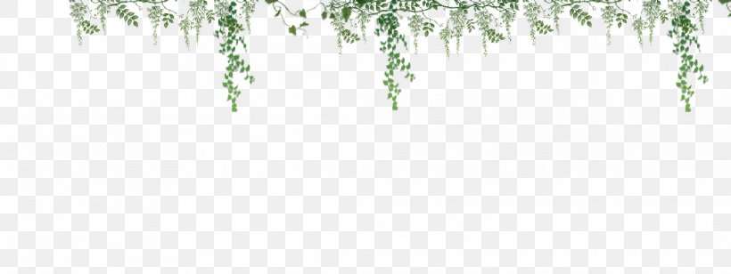 Twig Green Grasses Plant Stem Leaf, PNG, 1038x391px, Twig, Branch, Flora, Grass, Grass Family Download Free