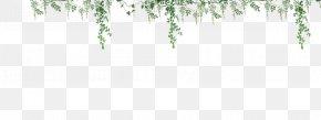 Leaf - Twig Green Grasses Plant Stem Leaf PNG