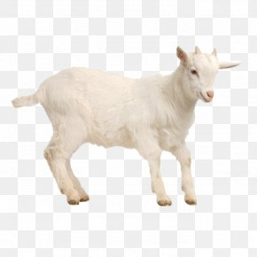 Goat - Goat Sheep Poultry Livestock PNG