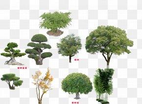 Tree - Tree Qiaomu Download PNG