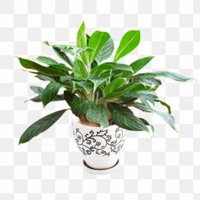 Flower Pot - Flowerpot Streamline Plant Pot Skull Garden Design POT CERAMIC PNG