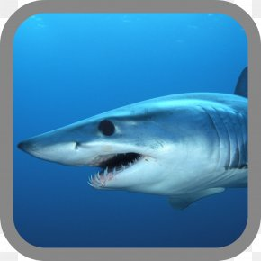 Shark - Hungry Shark Evolution Isurus Oxyrinchus Fishing Hammerhead Shark PNG