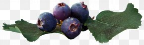 Beautiful Blueberries - Juice Fruit Blueberry Leaf PNG