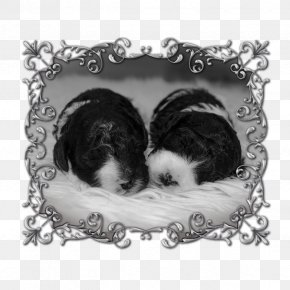 Puppy - Dog Breed Shih Tzu Puppy Love Picture Frames PNG