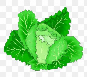 Cartoon Green Cabbage Vegetables - Leaf Vegetable Cabbage Clip Art PNG