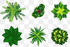 Vector Plant - Plant Euclidean Vector Illustration PNG