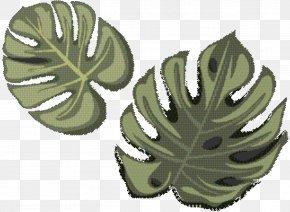 Perennial Plant Flower - Green Leaf Background PNG