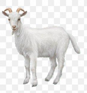 Goat - Goat Chiva Bus Ahuntz Animal Sheep PNG