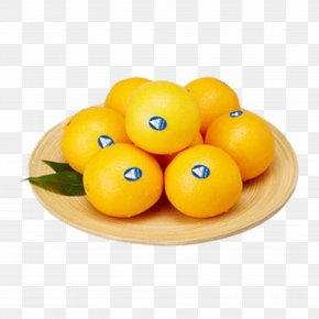 Australia Orange - Clementine Orange Tangerine Fruit PNG