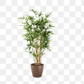 Tree - Tree Arecaceae Areca Palm Plant Tropical Woody Bamboos PNG