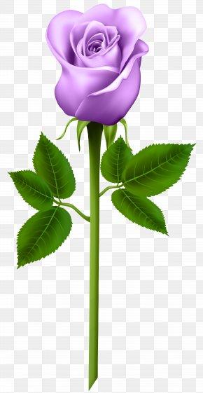 White Roses - Blue Rose Garden Roses Clip Art PNG