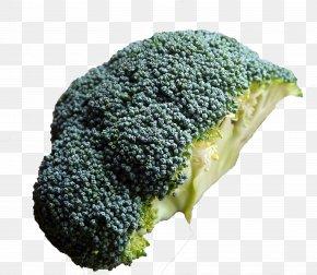 Broccoli Cut In Half - Broccoli Vegetable Food Ingredient Recipe PNG