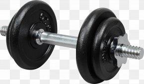 Hantel - Dumbbell Barbell Kettlebell Exercise Machine Physical Exercise PNG