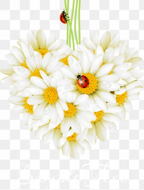 Beautifully Realistic Daisy Beetle - Valentines Day Love Greeting Card Holiday Birthday PNG