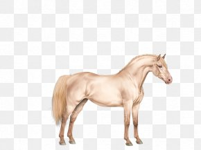 Pink Horses - Mustang Foal Stallion Mare Colt PNG