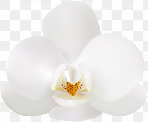 White Orchid Clip Art Image - White Design Product PNG