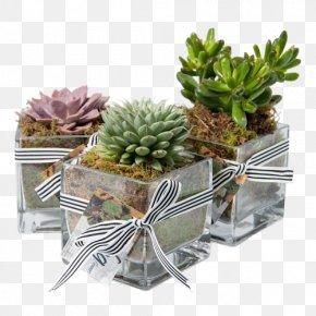 Succulent - Houseplant Succulent Plant Cactaceae Flowerpot PNG