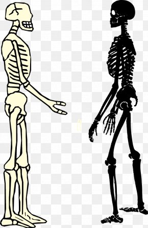 Male And Female Skeleton - Human Skeleton Homo Sapiens Bone PNG