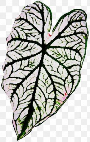 Herbaceous Plant Flower - Leaf Plant Flower Clip Art Herbaceous Plant PNG