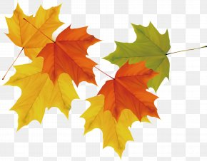 Vector Maple Leaf Picture - Maple Leaf Autumn PNG
