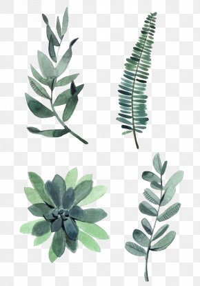 Watercolor Leaves - Watercolor Painting Drawing Plant Illustration PNG