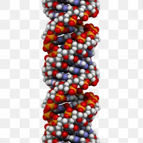 Gene Free Downloads - A-DNA Structure Nucleic Acid Double Helix Genetics PNG