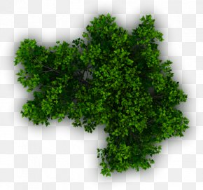 Lush Tree Top - Shrub Tree Plant Evergreen PNG