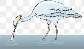 Water Bird - Bird Spoonbill Clip Art PNG