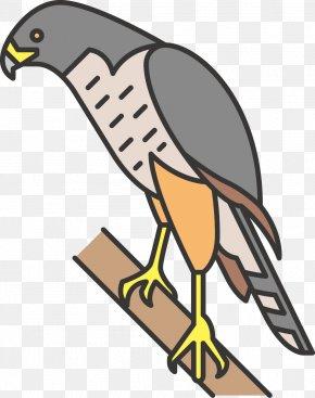 Eagle - Beak Bird Of Prey Clip Art PNG