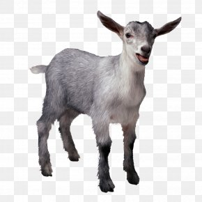 Goat - Goat Sheep Organization Christmas Gift-bringer Public Relations PNG