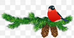 Transparent Pine Branch With Cones And Bird - Pine Branch Clip Art PNG