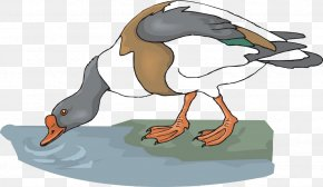 Drink Goose - Goose Drinking Water Animal Clip Art PNG