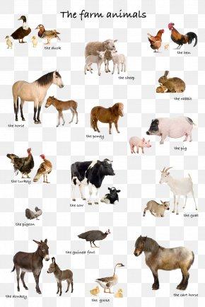 Animal - Livestock Stock Photography Farm Illustration PNG