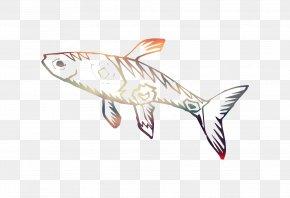 Shark Fauna PNG