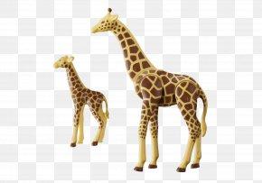 Giraffe - Calf Northern Giraffe Playmobil Child Zoo PNG