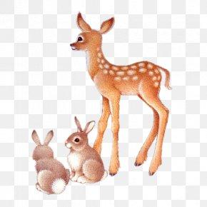 Deer - Roe Deer PNG