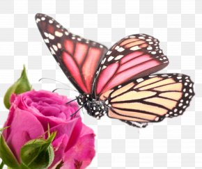 Butterfly And Flower - Samsung Galaxy Note Edge Samsung Galaxy Note 4 High-definition Video 1080p Wallpaper PNG