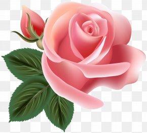 Pink Rose Clip Art Image - Garden Roses Centifolia Roses Rosa Chinensis Floribunda Floral Design PNG