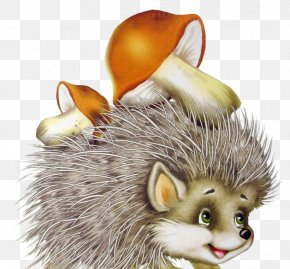 Hedgehog - Domesticated Hedgehog European Hedgehog Animal Porcupine PNG