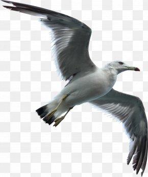 Seagull Swallow - Gulls Bird Flight Bird Flight Sky PNG