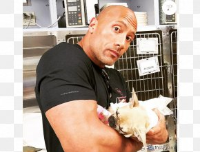 Dwayne Johnson - Dwayne Johnson French Bulldog Puppy The Rock Says-- : The Most Electrifying Man In Sports-entertainment PNG