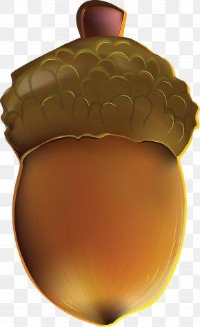 Acorn Image - Acorn Download PNG